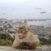 gibraltar-vom-affenfelsen