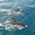 delfine-delfine